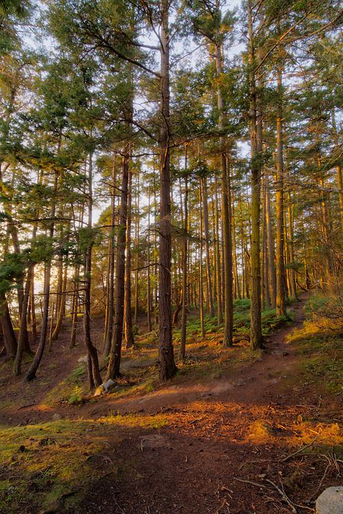 A coastal douglas fir forest trail winds its way up the hill near the cliffs of Fidalgo Island on Washington's Puget Sound.