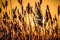 Tall grass, lighthouse, sunset, silhouette. April 23, 2015. Patrick Flood Photography