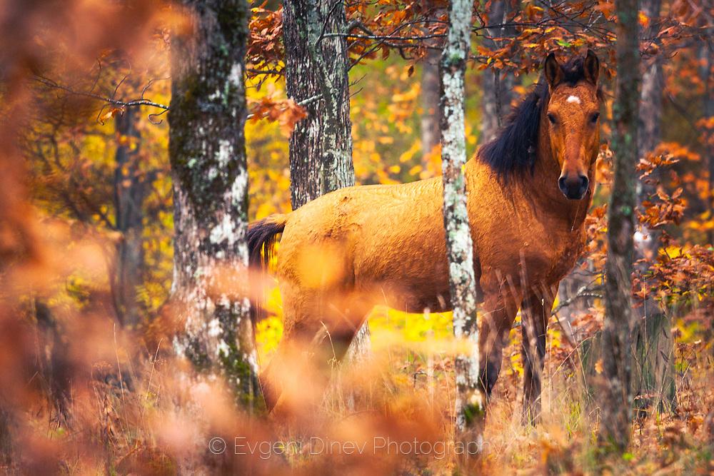 Wild stallion in the forest