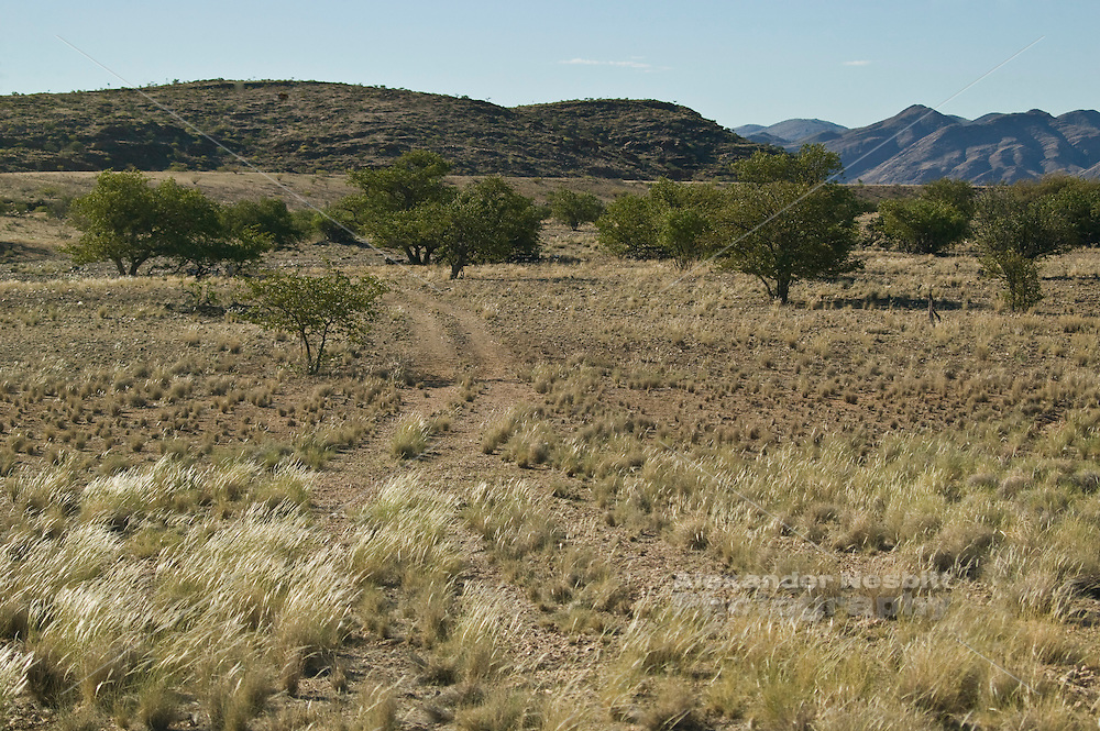 Africa, Namibia - Old jeep track through bush toward river bed near Puros