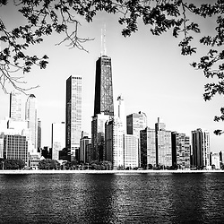 Chicago Skyline black and white picture. Photo includes Northern Chicago skyline and John Hancock building surrounded by tree leaves and branches.
