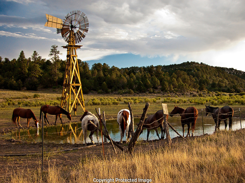 Horses converge on the waterhole,as the sun begins to set, on the Zion Ponderosa Ranch in southern Utah. The windmill is still used to pump water to these waterholes.