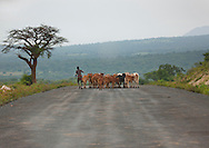 Shepherd and cattle on coated road, Omo valley, Ethiopia. For the moment, cattle use the roads, cars are pretty scarce, but the opening up of the area is rapidly advancing. The south<br />