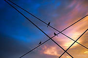 Three Starlings greeting the morning on bridge cabling.