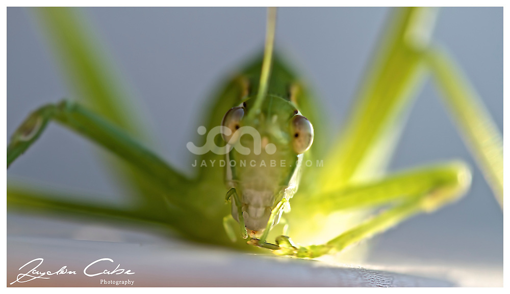 Macro Shots from jaydon cabe Photography