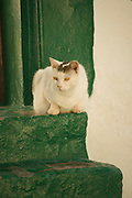 Cat laying on green steps on Hydra, Greece.