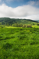 Lush green grasses and rolling hills of the Virginia Blue Ridge as seen from Thompson Wildlife Management Area.