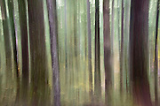 The light filtered down through the hemolocs in Mt Rainier National Park.