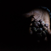 A handful of shea nuts illuminated by light from a torch in Baazing in the Upper West Region of Ghana on 24 June 2015. Shea nuts grow wild and are harvested and processed to produce a butter that can be used for cooking as well as on the skin. Though very labour intensive to produce, it is an important source of income for women in the Upper West region of Ghana.
