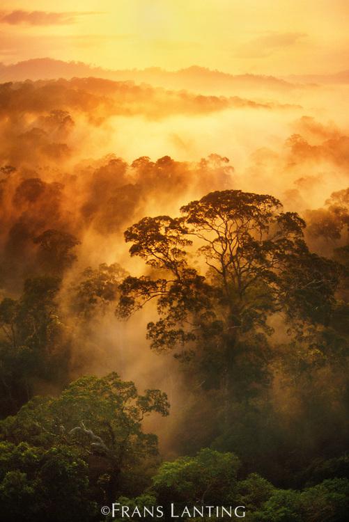 Sunrise over misty rainforest, Danum Valley, Sabah, Borneo