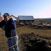 "Farmer Darrell Noteboom, 52, raises 500 sheep on his farm near Alton, Iowa.  Noteboom, who has been farming for almost 30 years, survived the farm crisis of the '80's but is concerned about the future of small towns in Iowa.  "" People need to support their local businesses instead of driving to the city and going to Wal-Mart,"" Noteboom said.   - PHOTOGRAPH BY DAVID PETERSON -   Photo by David Peterson"