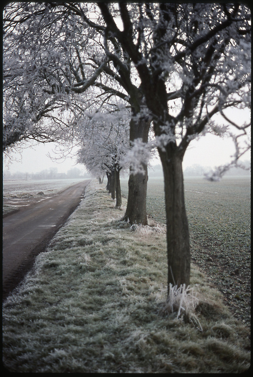 Row of Trees in Winter