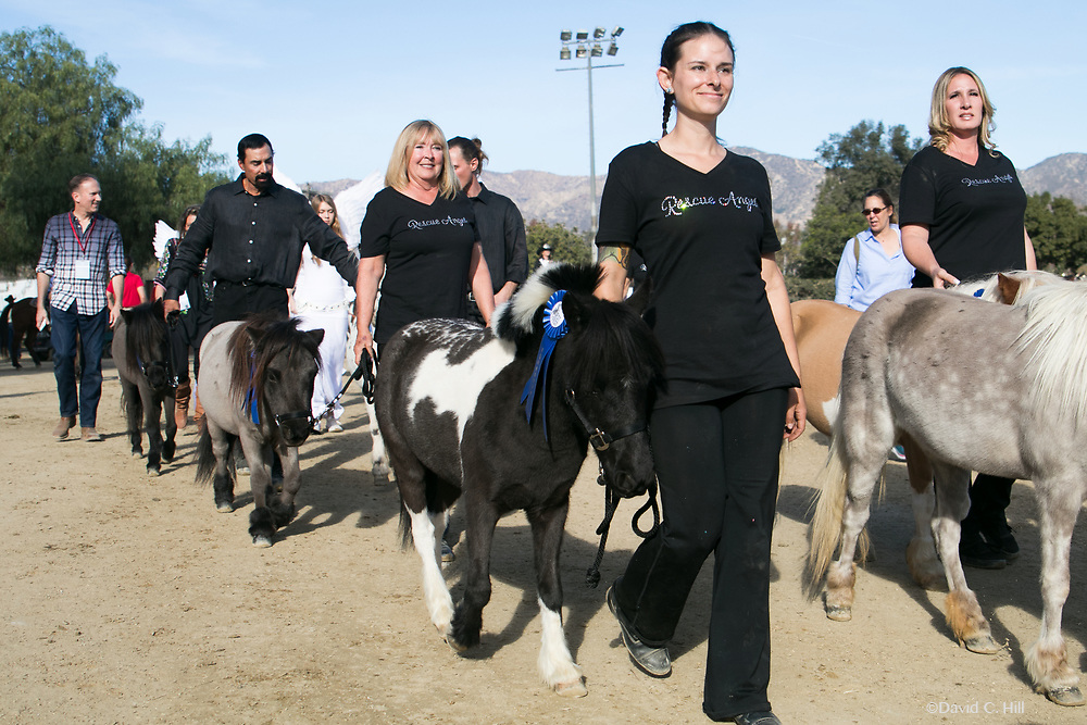 EQUESTFEST PRESENTED BY WELLS FARGO Tournament of Rose's Parade pre-event. Los Angeles Equestrian Center Burbank, California