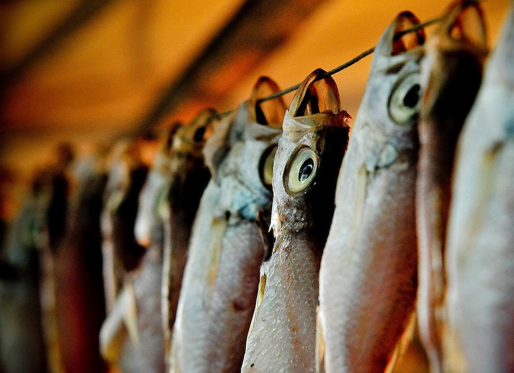 Fish hang to dry at a market in Busan, Korea.