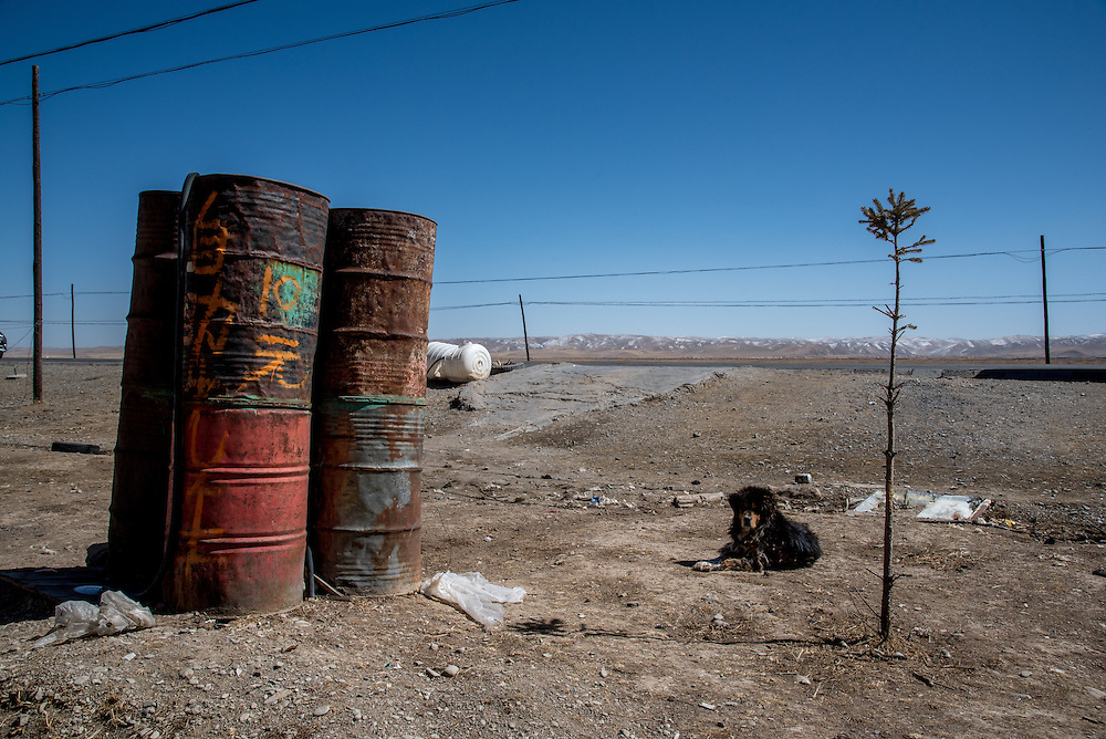 A dog basks in the sun in Golok region, Tibet (Qinghai, China).