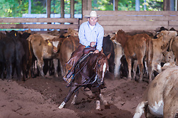 September 24, 2017 - Minshall Farm Cutting 6, held at Minshall Farms, Hillsburgh Ontario. The event was put on by the Ontario Cutting Horse Association. Riding in the Non-Pro Class is J P Gravel on Red Hott Twister owned by the rider.