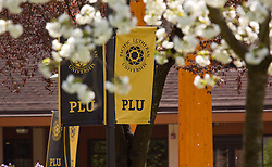 Spring sunshine on blooming trees at PLU on Wednesday, April 3, 2013. (Photo/John Froschauer)
