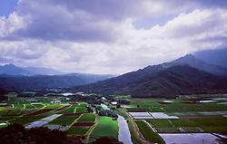 Taro Fields, Kauai, Hawaii, US
