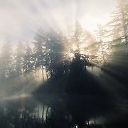 Sun rays breaking through the trees at sunrise on Puget Sound. Taken with an iPhone