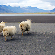 Somewhere on the Ring Road in Iceland.