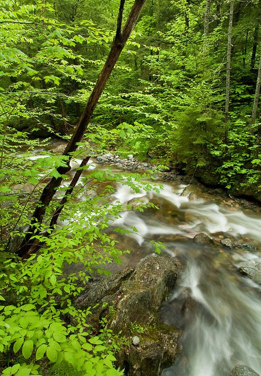 Spring along Hancock Brook in Worcester, VT.
