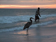 Indian Shores, Florida. USA. General View, Sunset. sky lite by the sun under  the horizon. Fisherman accompanied, by a Heron. Gulf Mexico,<br /> <br /> Friday  28/10/2011<br /> © Peter SPURRIER<br />  <br /> <br /> NIKON - COOLPIX P7000 - 1/29 - f5  2.0MB MB