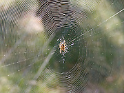 a spider in the center of its web