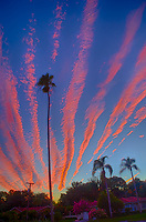 Moon, Palm Tree Silhouettes, and Orange Contrail Clouds at Sunset in St. Petersburg, Florida. Image taken with a Leica T camera and 11-23 mm wide-angle zoom lens (ISO 400, 18 mm, f/5.7, 1/125 sec).
