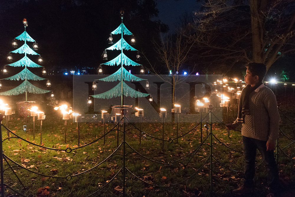 © Licensed to London News Pictures. 21/11/2017. London, UK. A visitor views illuminated christmas trees at the opening of Christmas at Kew at Royal Botanical Gardens, Kew. The spectacular displays are illuminated by over one million tiny twinkling lights placed all over Kew Gardens - open Wednesdays – Sundays from 22 November 2017 – 2 January 2017. London, UK. Photo credit: Ray Tang/LNP