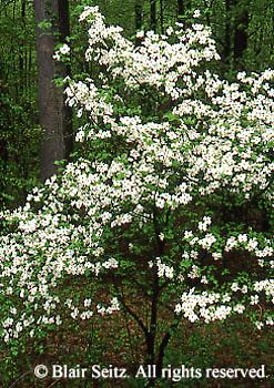Spring, Pennsylvania