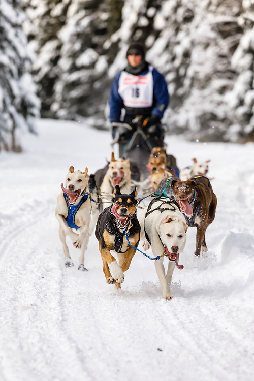 Musher Nathan Sterling competing in the Fur Rendezvous World Sled Dog Championships at Goose Lake Park in Anchorage in Southcentral Alaska. Winter. Afternoon.