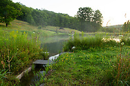 Wildflowers around a small pond in spring at Firefly Farm, Hauverville, New York, U.S.A.