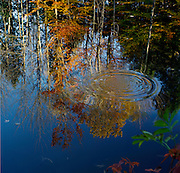 Water reflections, fall, maple trees