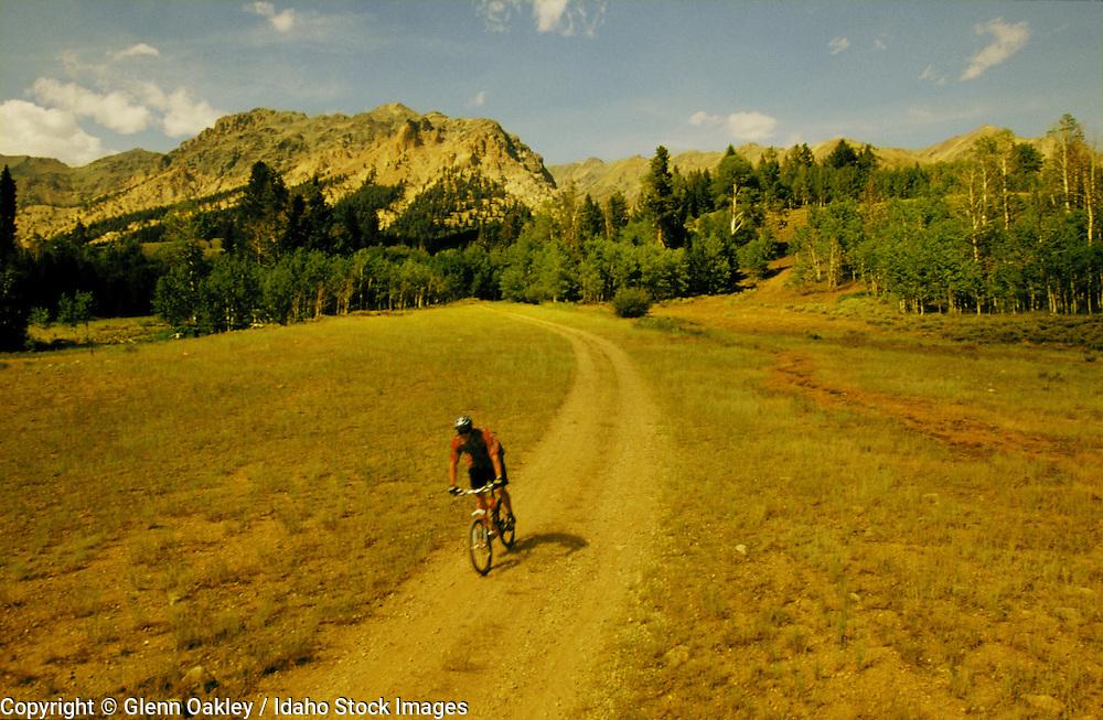Mountain biking down a dirt road, Boulder Mtns, Idaho. MR