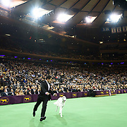 "February 16, 2016 - New York, NY : The Borzoi participates in Best of Show judging during the 140th Annual Westminster Kennel Club Dog Show at Madison Square Garden in Manhattan on Tuesday evening, February 16, 2016. (2016 Reserve Best In Show was awarded to ""CH Belisarius Jp My Sassy Girl,"" a Borzoi.)  CREDIT: Karsten Moran for The New York Times"