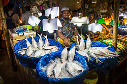 A fish seller selling Hilsa(Ilish in Bengali) fishes in a local fish market of Dhaka. Hilsa fish is considered to be one of most favorite and delicious fish in South Asia. The fish contributes about 12% of the total fish production and about 1% of GDP in Bangladesh.It is also the national fish of Bangladesh.Hilsa fish has been accorded geographical identification (GI), which has tagged the fish as a Bangladeshi product since August 2017.