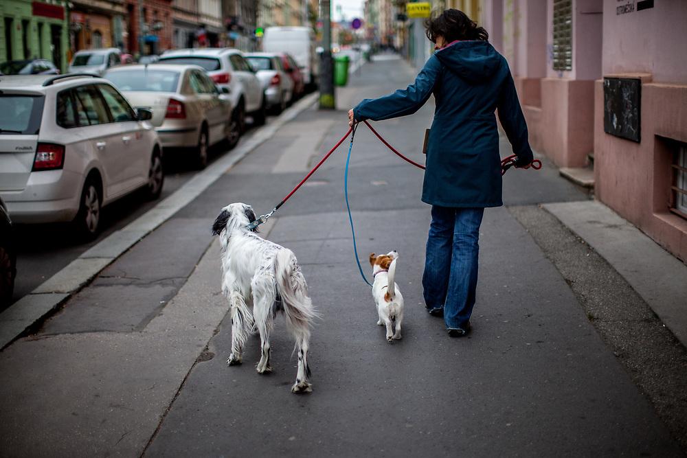 """English Setter """"Rudy"""" am 27.10. 2018 mit seiner Freundin Casie auf einem Spaziergang im Prager Stadtteil Zizkov, Tschechische Republik.  Rudy wurde Anfang Januar 2017 geboren."""