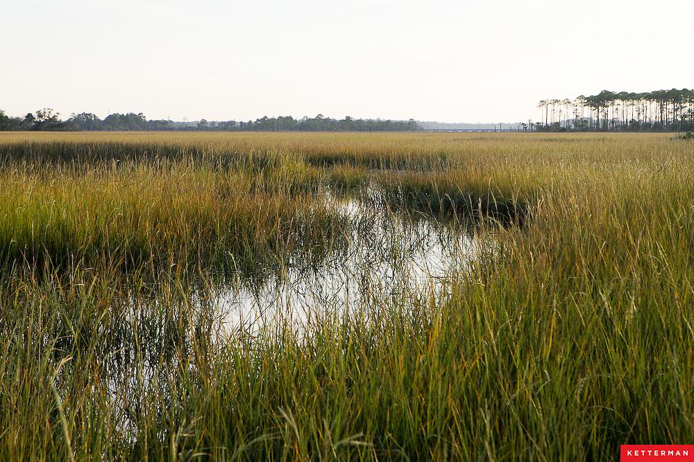 The marsh along the intercoastal waterway in Jacksonville, Florida.