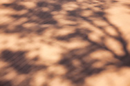 Shadows of a Tamarisk tree in desert sand.