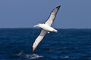 Africa seabird photos