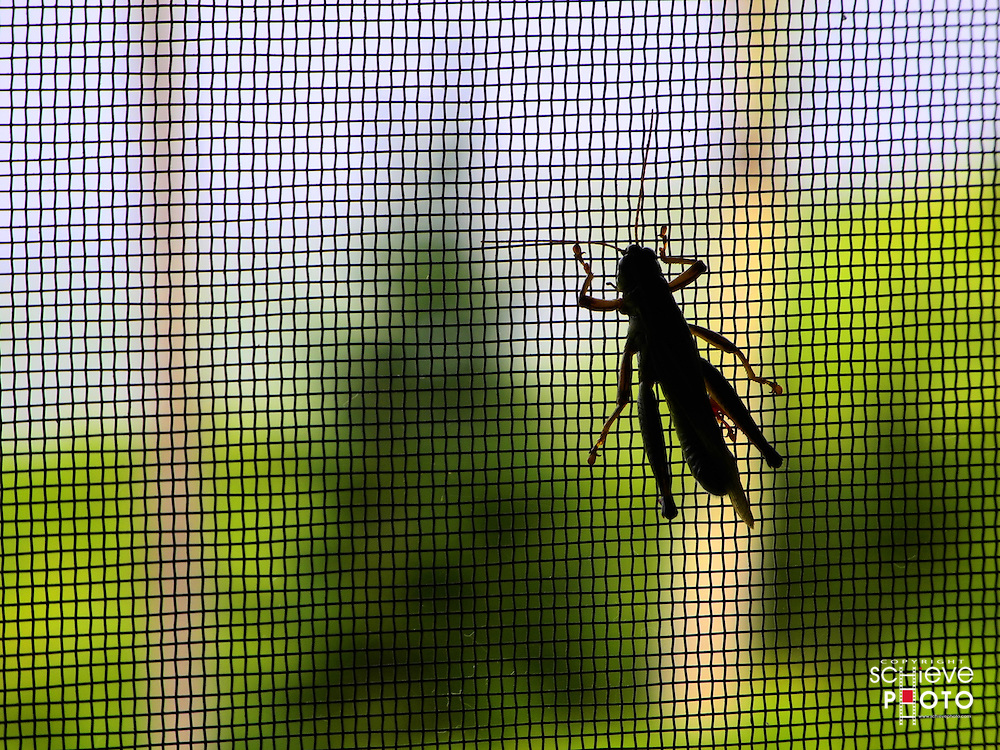 A grasshopper takes in the view of Spider Lake from the screened-in porch.