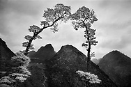 Vietnam Images-Fine art-nature. hoàng thế nhiệm