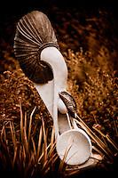 Zimsculpt at Van Dusen Botanical Garden: Gold Panner - springstone sculpture by Samson Kavungura (original sculpture available at www.zimsculpt.com)