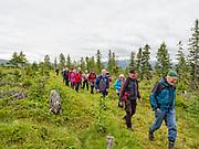 Lørdag 17. juni 2017 arrangerte Selbu og Tydal historielag tur langs gammelvegen mellom Hillmo i Tydal og Flora i Selbu. Oppmøte var ved nydyrkingsfeltet nord for Hillmogrenda. <br /> Turen gikk langs den gamle ferdselsvegen mellom  Tydal og Selbu. Undervegs ble det orientering om kulturminner og historiske hendelser knyttet til området. Turen er ca 5 km tur retur.