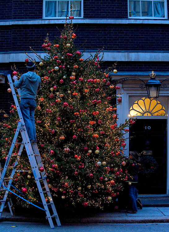 LONDON DECEMBER 4  Final preparations outside  n 10 Downing Street before the official  lighting up of the Christmas Tree offered the British Christmas Tree Growers...***Agreed Fee's Apply To All Image Use***.Marco Secchi /Xianpix. tel +44 (0) 771 7298571. e-mail ms@msecchi.com .www.marcosecchi.com