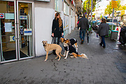 Urban Female dog walker in Florentin neighbourhood, Tel Aviv, Israel
