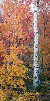 Fall's fury comes on quick in Utah's Wasatch Mountains and leaves nearly as fast.