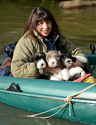 © London News Pictures. 09/02/2014. Wraysbury, UK.  Sue O'Brien and her three puppies being rescued from her home which is flooded in Wraysbury, Surrey. The Thames river has hit record levels causing extensive flooding to parts of the southeast of England. Photo credit : Ben Cawthra/LNP