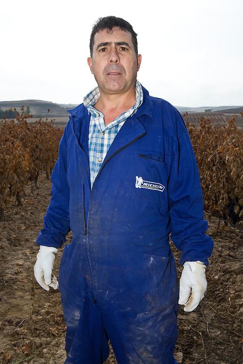 Local worker in Ribera del Duero (Spain)<br /> D&iacute;a de la vendimia en los vi&ntilde;edos de Ribera del Duero (Espa&ntilde;a)