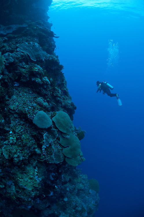 Bunaken Marine Park is a very popular dive destination, famous for its beautiful coral reefs, marine biodiversity and vertical walls.